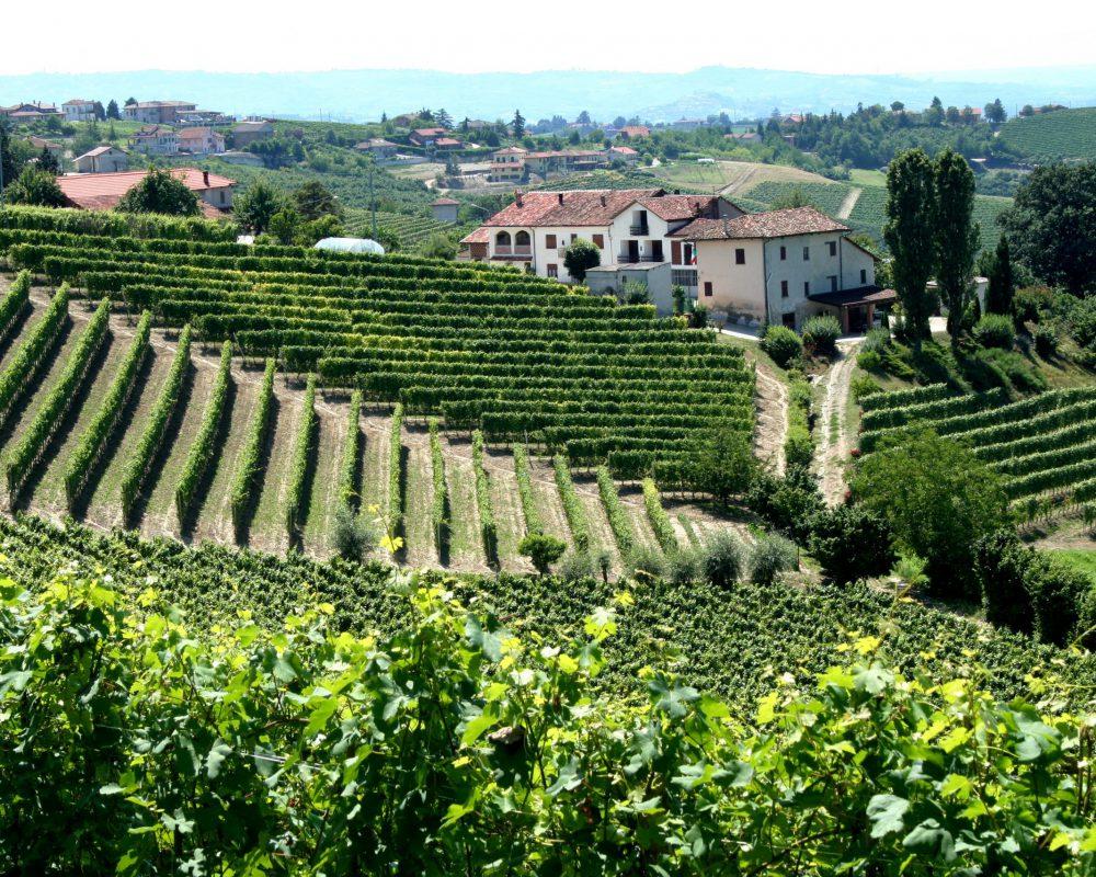 Piemonte,_Italy_vineyards_with_village